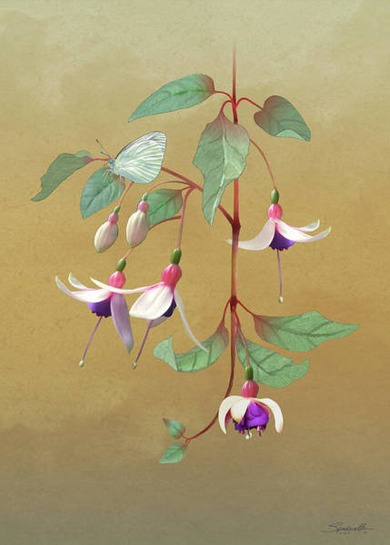 Wall Art - Digital Art - Fuchsia And Butterfly by Spadecaller