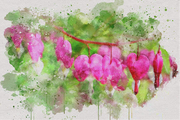 Photograph - Bleeding Hearts 2 by Marilyn Wilson