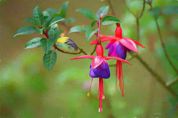Painting - Fuchsia Flower - Painting by Ericamaxine Price