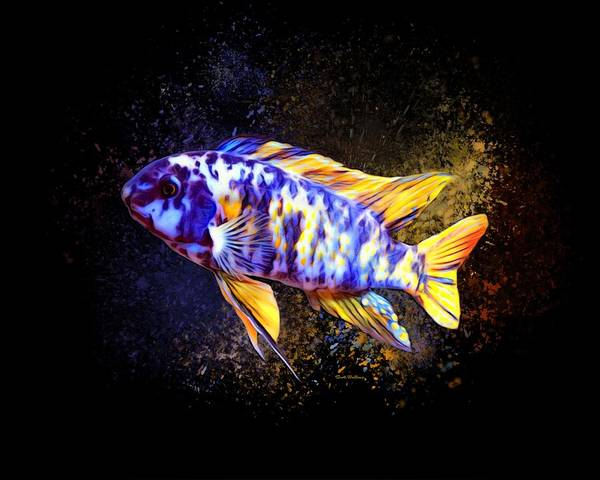 Wall Art - Digital Art - Fuelleborni Marmalade Cichlid  by Scott Wallace Digital Designs