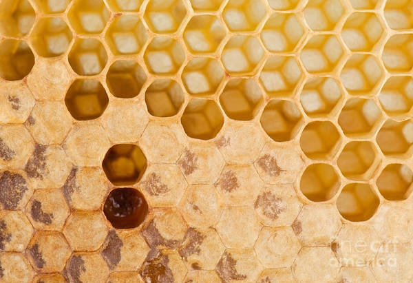 Raw Wall Art - Photograph - Full And Empty Honeycomb Close Up by Vova Shevchuk