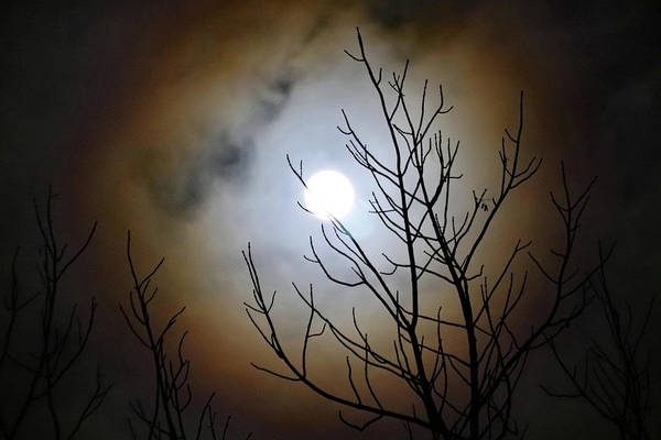 Photograph - Full Moon Halo by David T Wilkinson