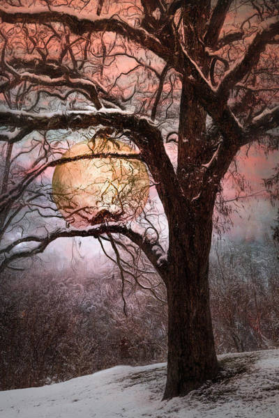 Photograph - Full Moon On A Winter's Eve by Debra and Dave Vanderlaan