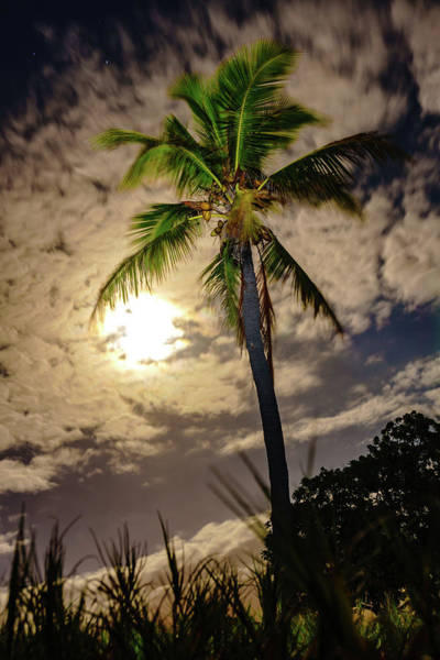 Photograph - Full Moon Palm by John Bauer
