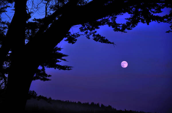 Monterey Cypress Photograph - Full Moon Rising Over Sea by Barbara Rich