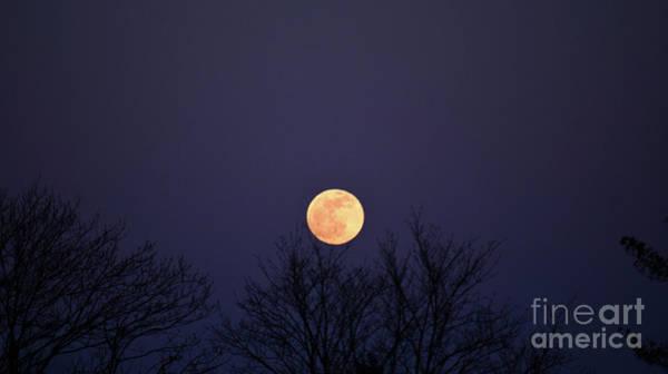 Photograph - Full Moon Rising by Patti Whitten