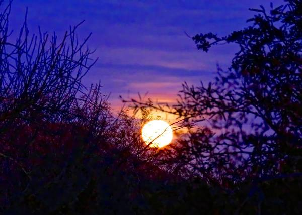 Photograph - Full Moonrise In Gemini by Judy Kennedy