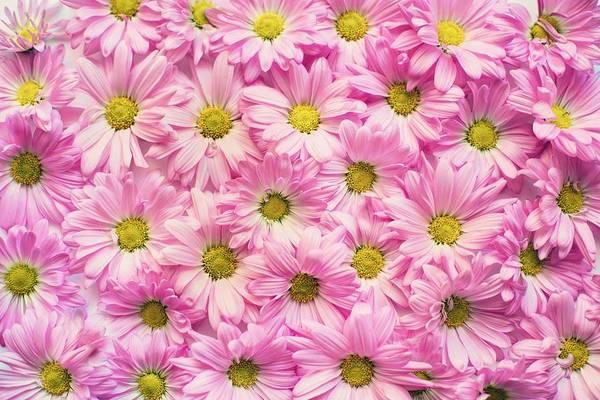 Full Of Pink Flowers Art Print