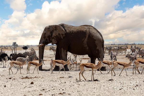 Wall Art - Photograph - Full Waterhole With Elephants, Zebras by Artush