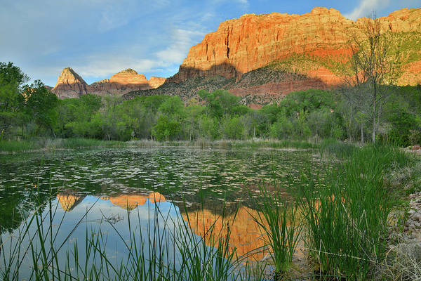 Photograph - Full Zion Canyon Pond Reflection by Ray Mathis