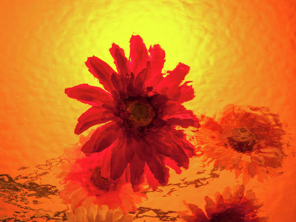 Photograph - Fun Flower by Stewart Helberg