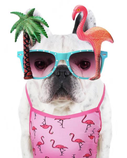 Wall Art - Photograph - Funny Dog  Wears Flamingo Glasses by Retales Botijero