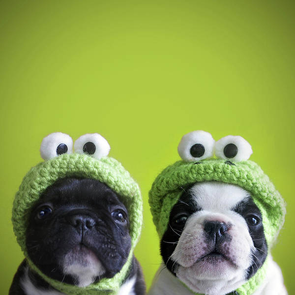 Dogs Photograph - Funny Dogs by Retales Botijero