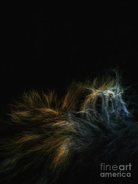 Photograph - Fur by Abbie Shores