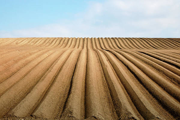 Photograph - Furrows by Nicholas Blackwell