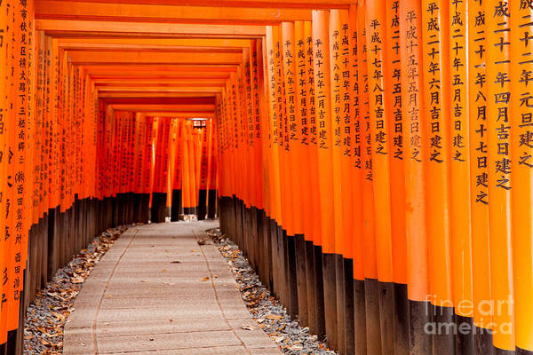Wall Art - Photograph - Fushimi Inari Taisha Shrine In Kyoto by Pigprox