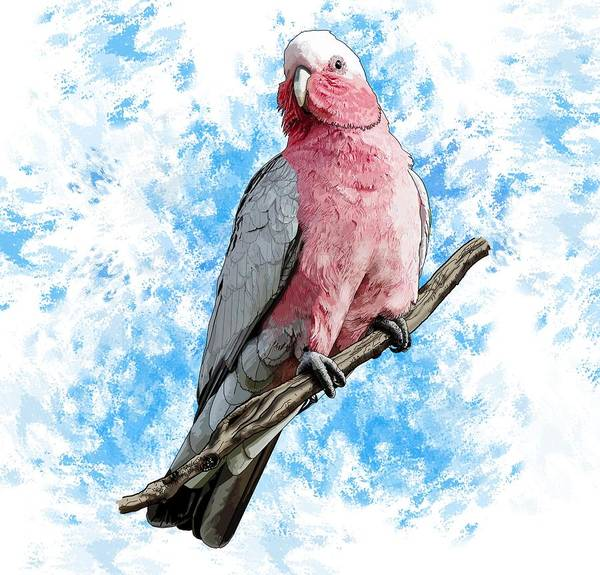 Digital Art - G Is For Galah by Joan Stratton