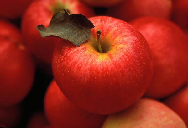 Gala Wall Art - Photograph - Gala Apples by Lyle Leduc