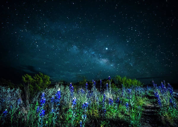 Photograph - Galactic Bluebonnets by David Morefield