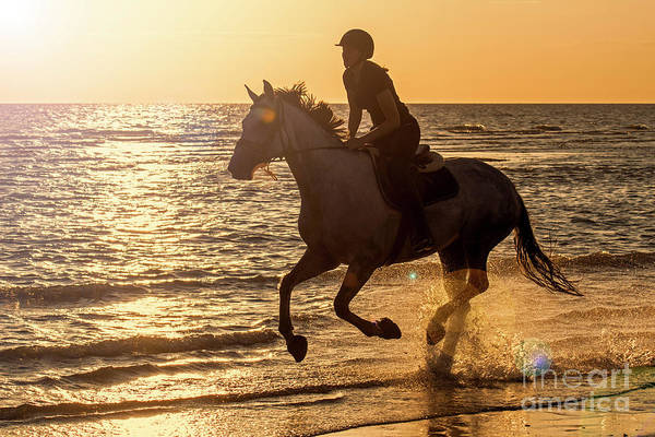Photograph - Galloping At Sunset by Arterra Picture Library