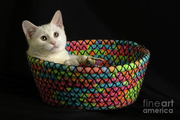 Photograph - Gandalf's Basket by Susan Warren