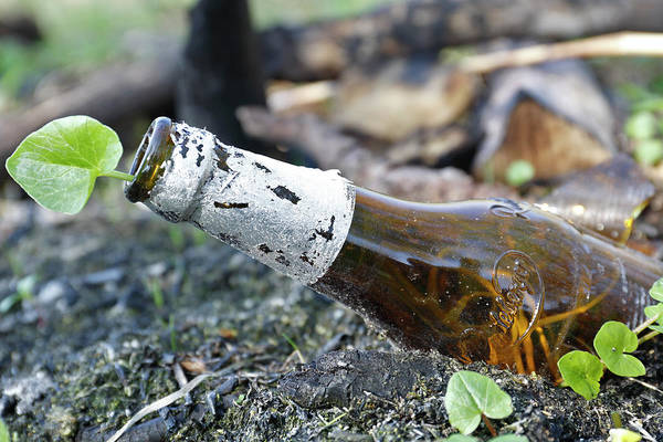 Wall Art - Photograph - Garbage Glass Bottle In Nature Plant Grows In Beer Bottle Mecklenburg-western Pomerania Germany by imageBROKER - Volker Lautenbach