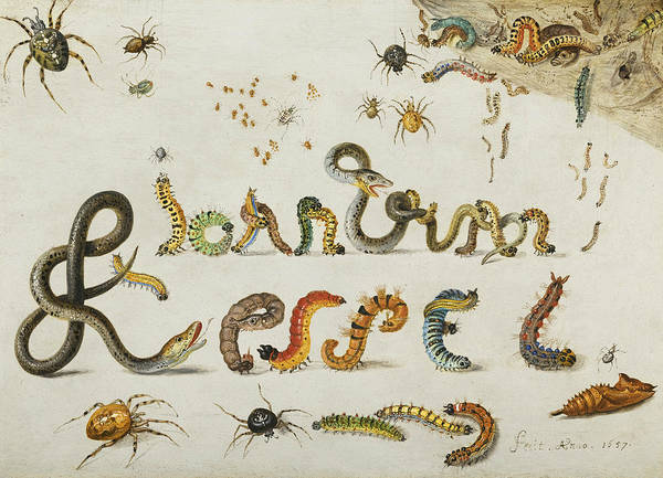 Painting - Garden And House Spiders With Grass Snakes And Caterpillars Contorted And Entwined  by Jan van Kessel the Elder