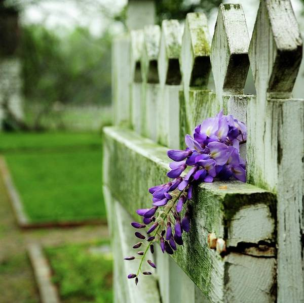 Wisteria Wall Art - Photograph - Garden Gate Entrance by Heather Black