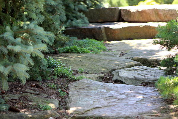 Photograph - Garden Landscape - Stone Stairs by Colleen Cornelius