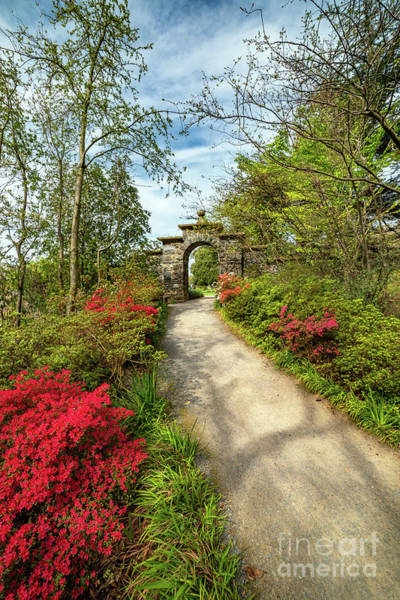 Wall Art - Photograph - Garden Path And Arch by Adrian Evans