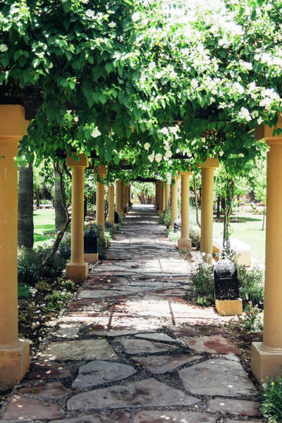 Wall Art - Photograph - Garden Path With Trees by Pati Photography