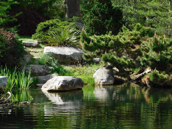 Wall Art - Photograph - Garden Pond by Arlane Crump