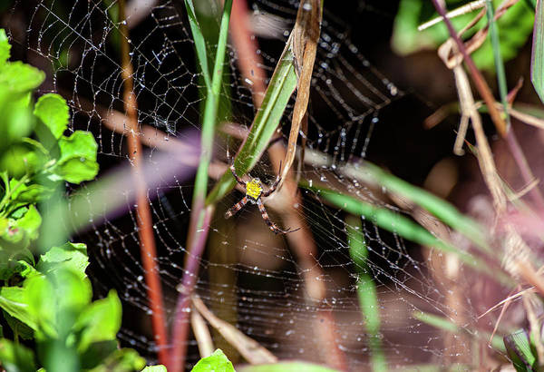 Photograph - Garden Spider by Anthony Jones