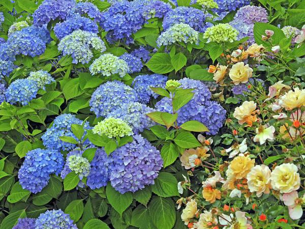 Photograph - Garden Splendor 2 by Lynda Lehmann
