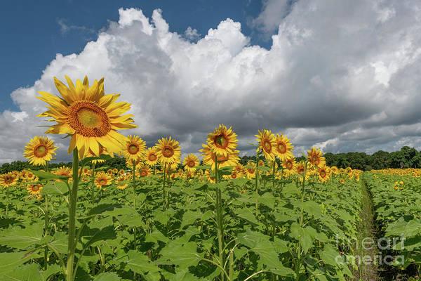 Photograph - Garden Sunshine by Dale Powell