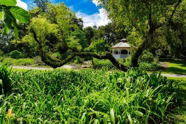 Photograph - Garden View Series 0239 by Carlos Diaz
