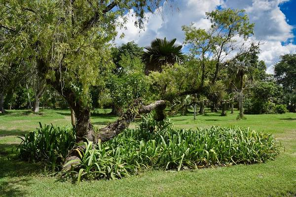 Photograph - Garden View Series 0241 by Carlos Diaz