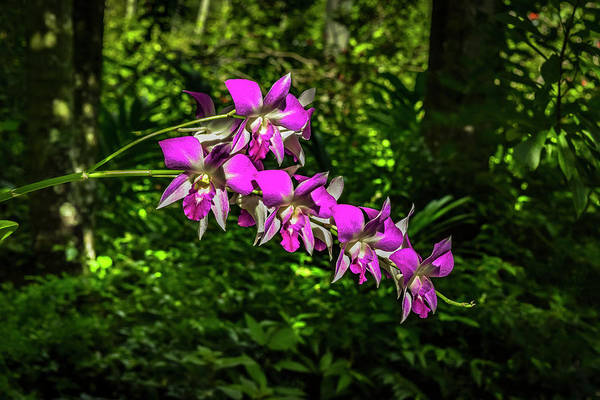 Photograph - Garden View Series 67 by Carlos Diaz