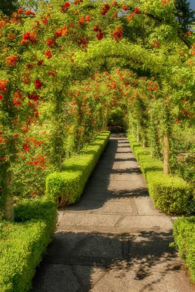 Photograph - Garden Walk by Thomas Gaitley