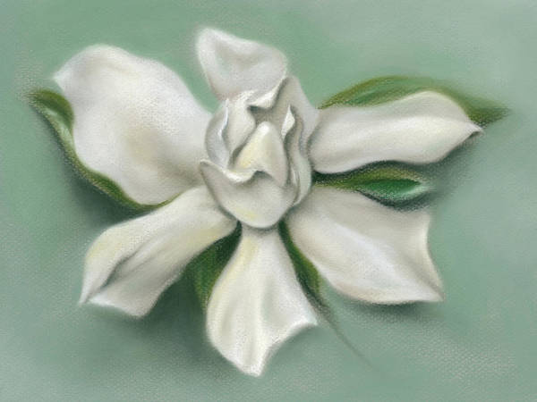 Pastel - Gardenia Flower by MM Anderson