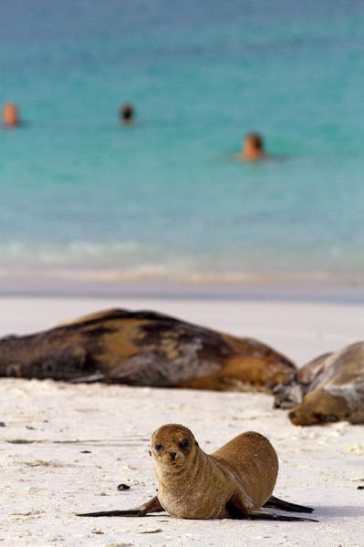 Galapagos Islands Wall Art - Photograph - Gardner Bay On Espanola Island by Andrew Bain