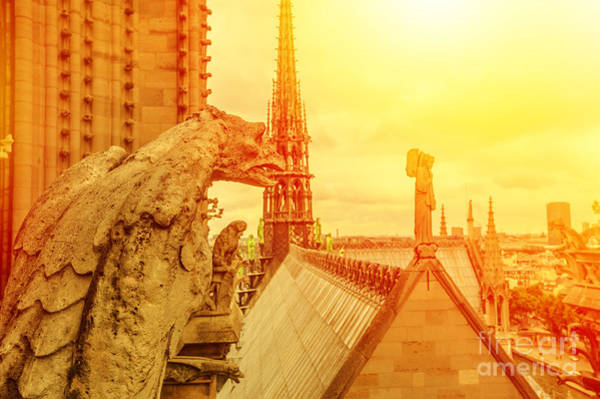 Photograph - gargoyle of Notre Dame at sunset by Benny Marty