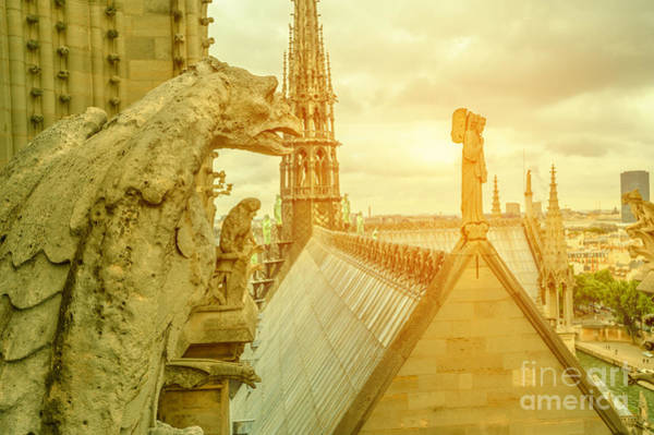 Photograph - gargoyle statue of Notre Dame at sunset by Benny Marty
