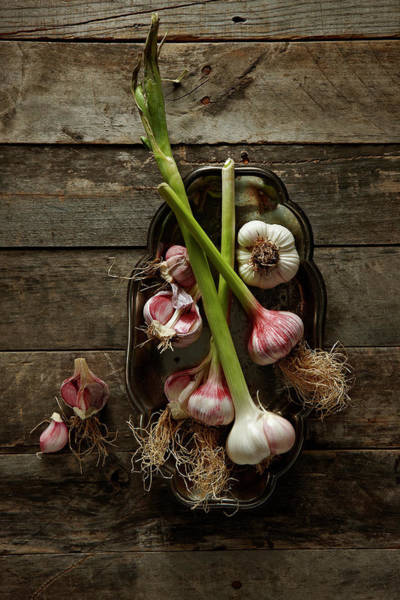 Wood Photograph - Garlic by Lew Robertson