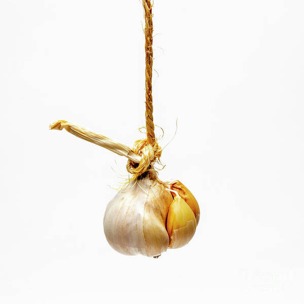 Wall Art - Photograph - Garlic On A White Background by Bernard Jaubert