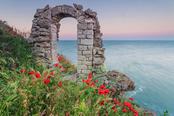 Gate In The Poppies Art Print