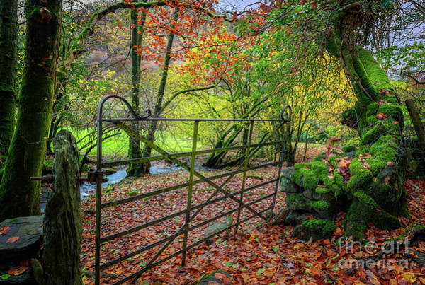 Wall Art - Photograph - Gate To Autumn by Adrian Evans