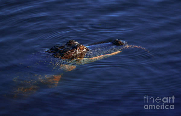 Photograph - Gator And Snake by Tom Claud