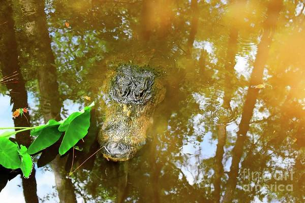 Wall Art - Photograph - Gator by Anne O'Reilly