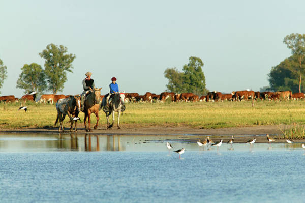 Photograph - Gauchos On Horseback by Picavet